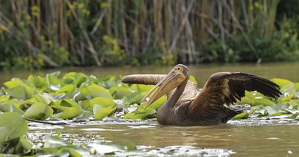 Eber Gölü'nde doğal yaşam