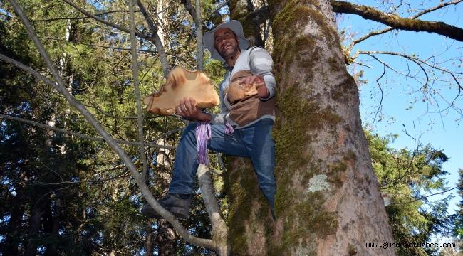 Çağman mantarını toplamak isteyenler ayılarla yarışıyor