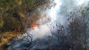 Ayvalık Hakkıbey yarımadasında orman yangını