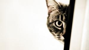 Kedisini beslemesine izin vermeyen ev sahibini öldürdü