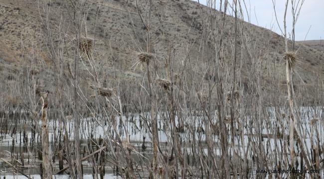 Baraj suları yükselince karabataklar yuvalarını taşıdı