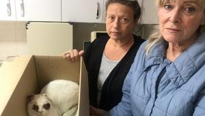 'İzmir'de kediye işkence yapıldı' iddiası: 'Vahşet değil kansermiş'