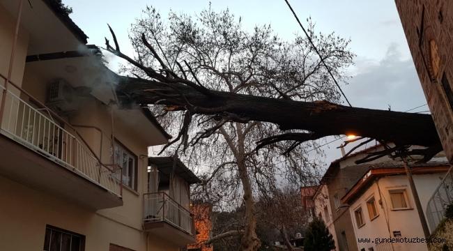 Devrilen anıt ağaç, bir evin çatısını yıktı