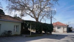 Sarıgöl'de asırlık çınar ağacı korunuyor