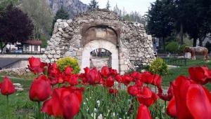 Bilim insanlarının yıllardır aradığı 'yitik lale' 2023'te Amasya'ya dönüyor