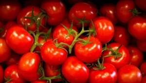 Ukrayna, Türkiye'den giden 38 ton domatesi geri gönderdi