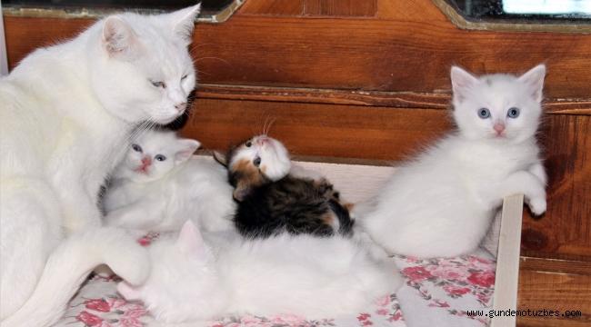 Van kedilerine renkli kardeş