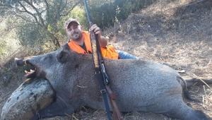 Aydın'da yaklaşık 300 kiloluk yaban domuzu avlandı