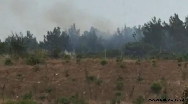 Düşen yıldırım ormanı yaktı