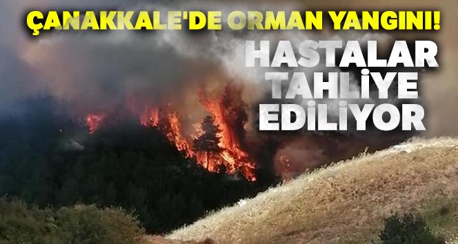 Çanakkale'de orman yangını! Havadan ve karadan çok sayıda itfaiye ekibi müdahale ediyor