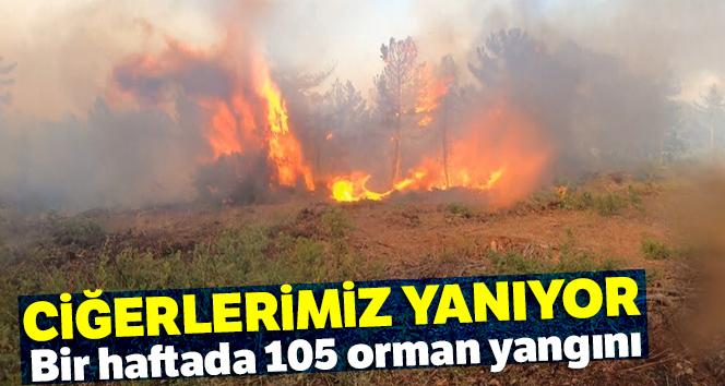 Ciğerlerimiz yanıyor  Bir haftada 105 orman yangını