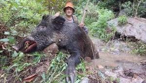 Dev domuz vuruldu