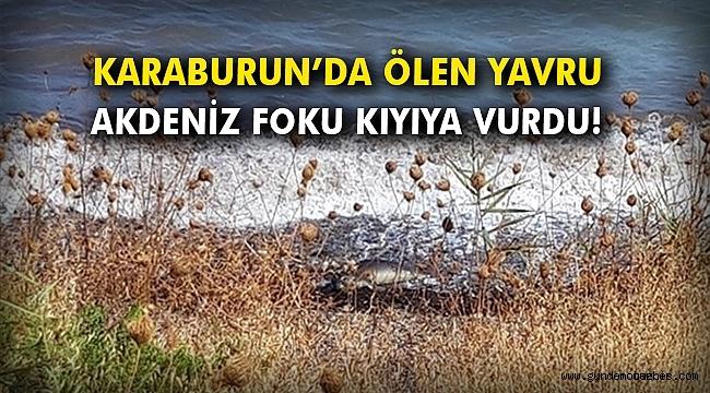 Karaburun'da ölen yavru Akdeniz foku kıyıya vurdu