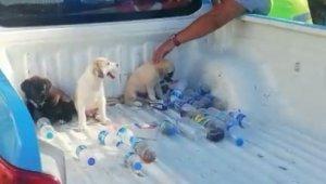 Ölmek üzere olan yavru köpekler hayata döndürüldü