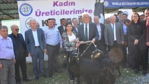 Muğla'da kadın üreticilere kıl keçisi dağıtıldı