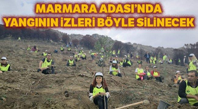 Marmara Adası'nda yangının izleri dikilen fidanlarla silinecek