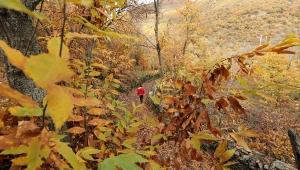 Aydın dağlarında renk cümbüşü