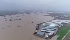 Hırsızlar sele sebep oldu... Binlerce dönüm ekili alan ve 2 bin boğa sular altında kaldı