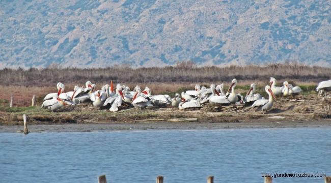Milli park kuş cenneti oldu