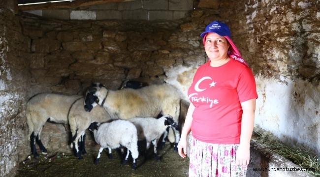 Sakız koyunları dertlere derman oldu