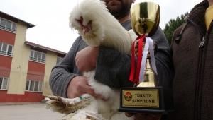 Türkiye şampiyonu 'Pusat'a paha biçilemiyor