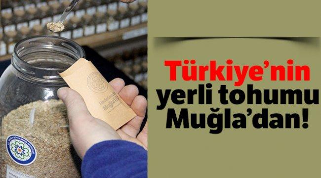 Türkiye'nin yerli tohumu Muğla'dan