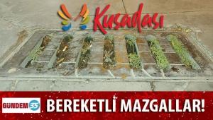 EN BEREKETLİ MAZGALLAR KUŞADASI'NDA! DOMATESLER BİLE YETİŞİYOR...
