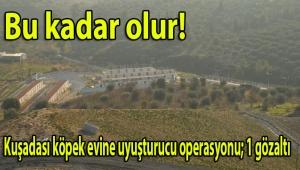 Aydın Büyükşehir Belediyesi tarafından işletilen Kuşadası köpek evine uyuşturucu operasyonu; 1 gözaltı