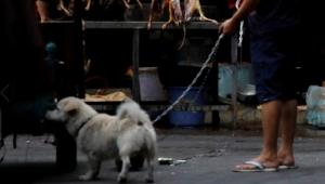 Tepkilere aldırmadılar: Çin'de tartışmalı köpek eti festivali başladı