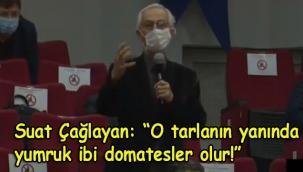 CHP'li Suat Çağlayan'dan Meclis'te 'bal gibi kavun, yumruk gibi domates yetişiyor' tespiti!