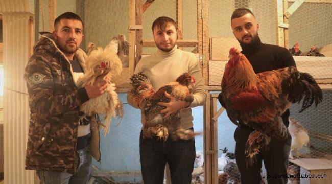 Çok sevdiği tavukları için müstakil ev kiraladı